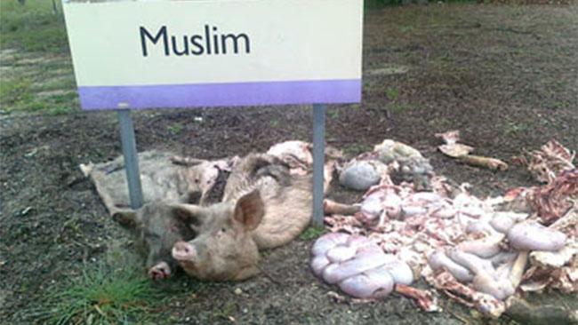 Rockingham pig carcass