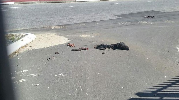 Perth mosque dead pig