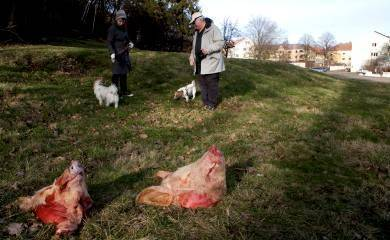 Pigs' heads at Gothenburg mosque site